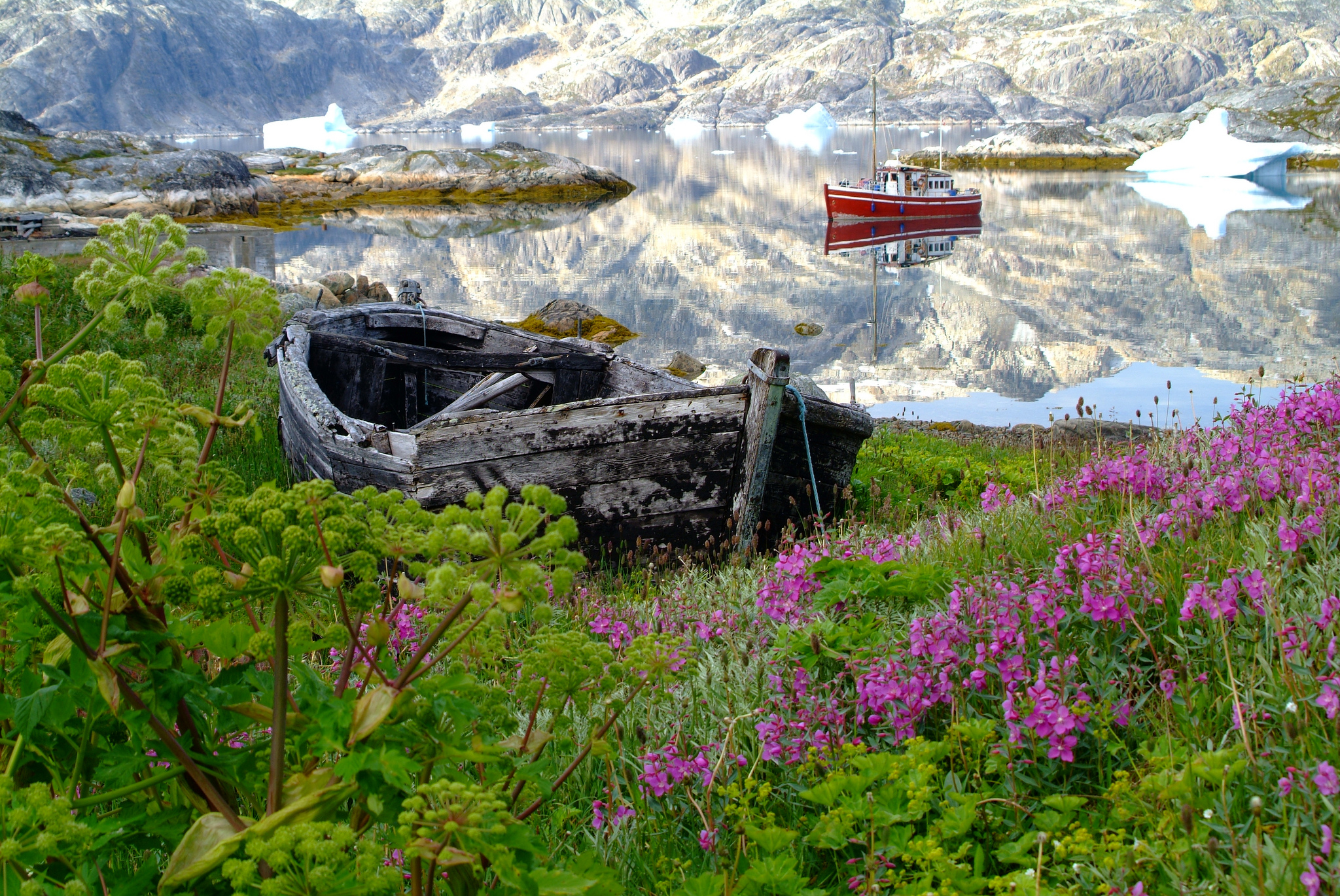 South Greenland: Ice & flowers